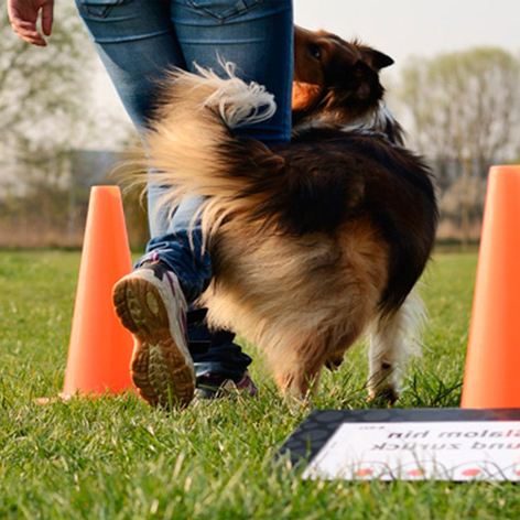 Oliver Steinberger Addestratore cinofilo - Rally Obedience Roma
